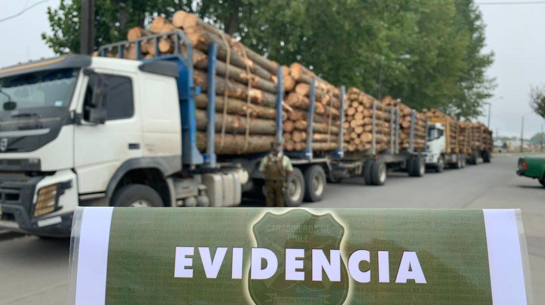 CARABINEROS DE ARAUCO RETIENE MADERA SUPUESTAMENTE ROBADA DE PREDIO FORESTAL