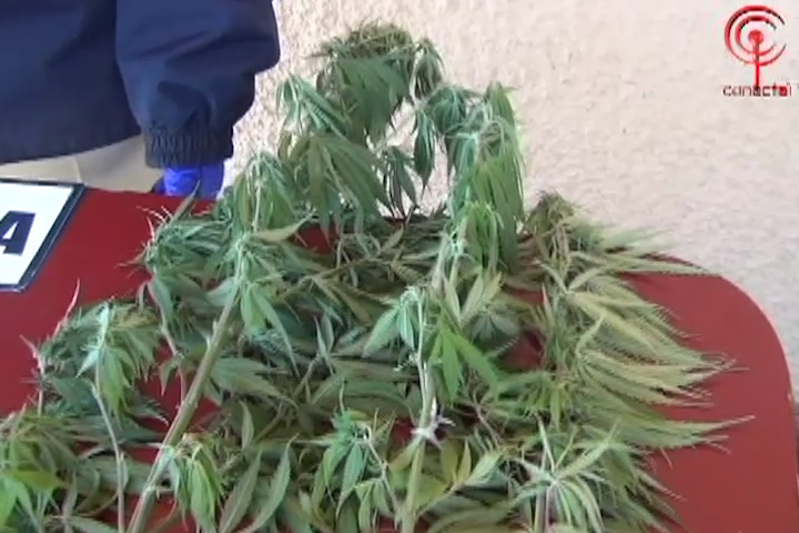 3.000 dosis incautadas y 4 detenidos deja operativo antidrogas en Cañete