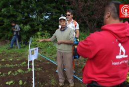 Agricultores de Isla de Pascua visitaron Cañete para conocer experiencias productivas exitosas.
