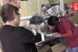 Municipio de Cañete implementó atención veterinaria gratuita para mascotas.