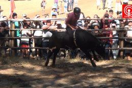 Feria Agrícola, Ganadera y Forestal de Cañete se consolida como gran evento del verano en la región del Biobio.