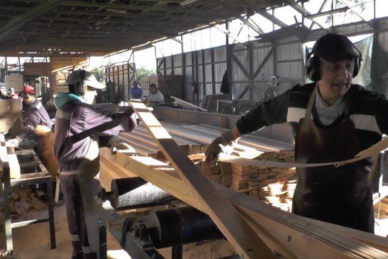 Proyecto asociativo busca mejorar competitividad de empresas madereras de la provincia de Arauco.