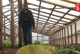 Ciento ochenta y seis campesinos de Cañete recibieron incentivos para proyectos de inversión.